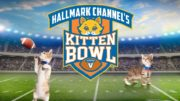 watch the kitten bowl online