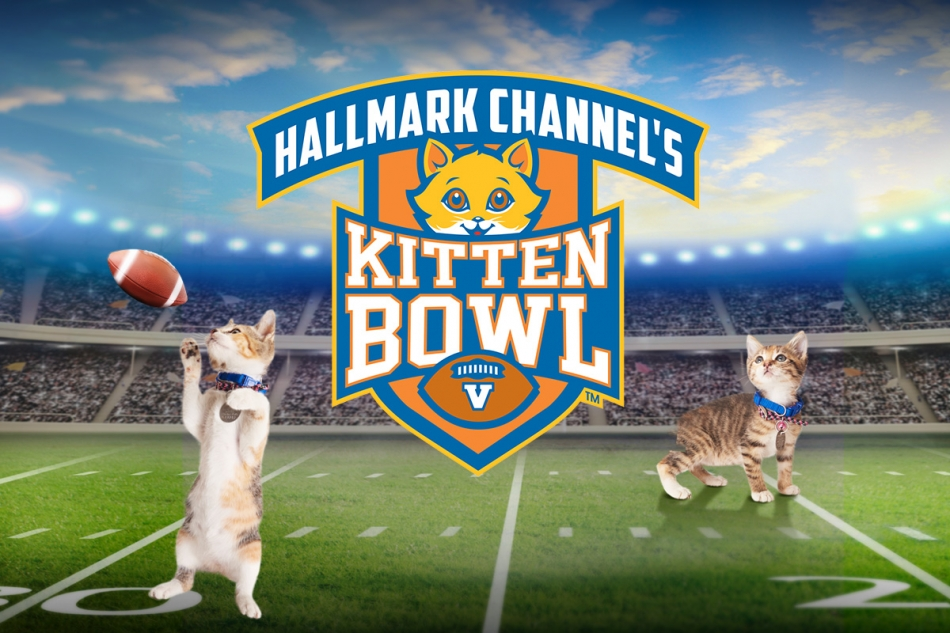 watch the kitten bowl online